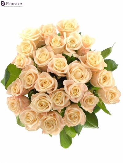 25 růží MEDEO