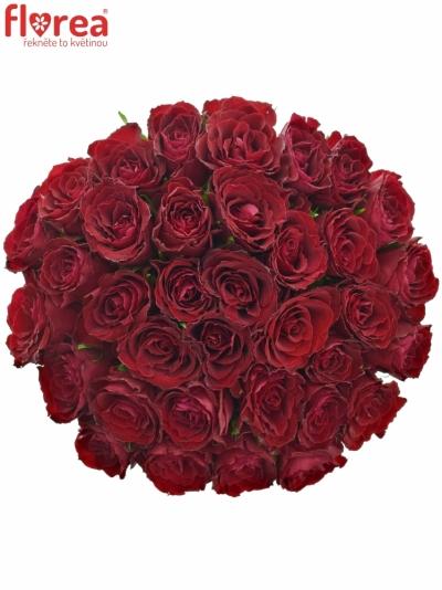 Kytice 35 rudých růží MADAM RED 60cm