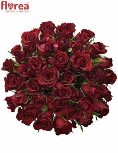 35 růží BURGUNDY