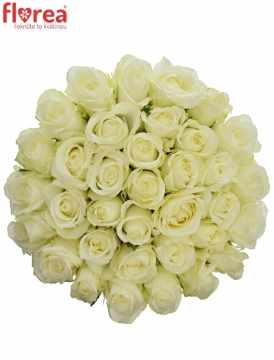 Kytice 35 bílých růží COUNTDOWN 60cm