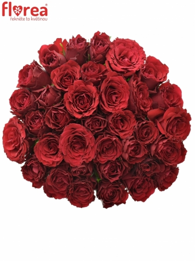 Kytice 35 rudých růží UPPER CLASS 50cm