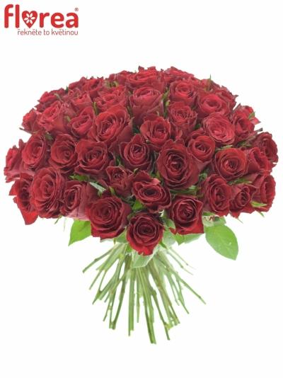 55 ROSA Madam Red