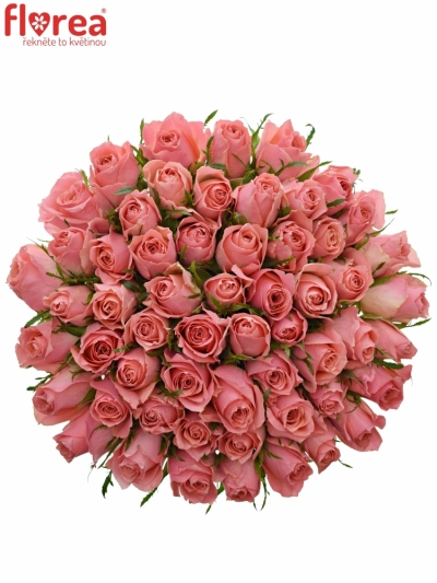 55 růží ACE PINK+