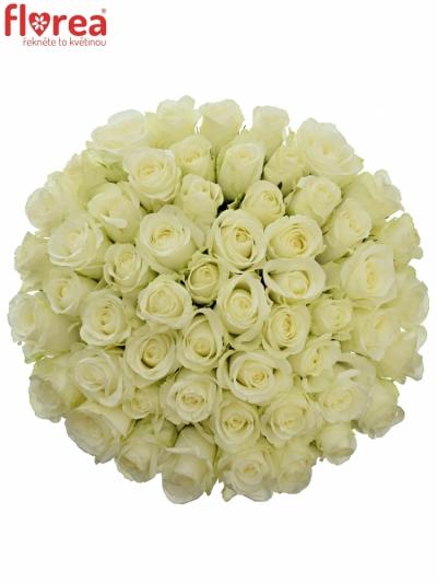 Kytice 55 bílých růží COUNTDOWN 60cm