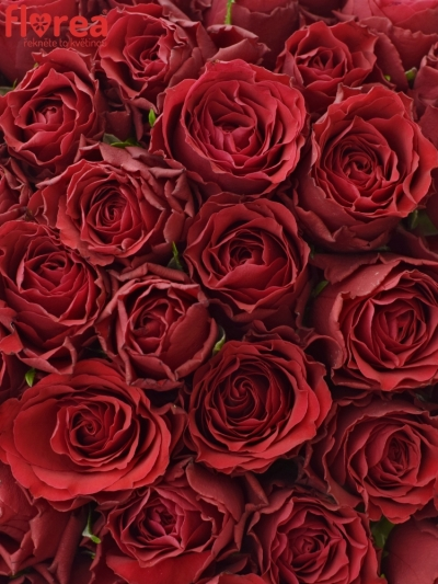55 růží Upper Class