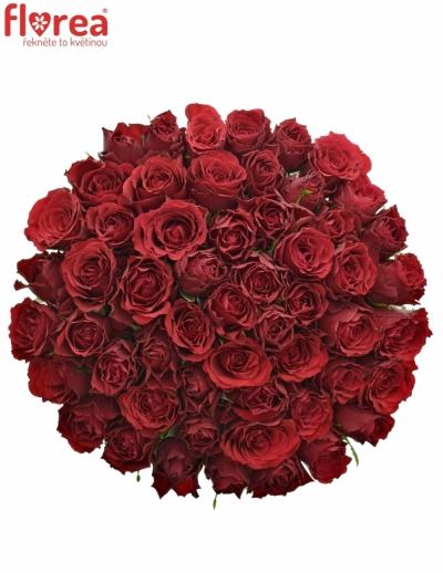 Kytice 55 rudých růží UPPER CLASS 50cm