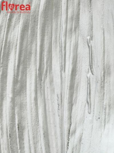 ASPIDISTRA SILVER 80cm