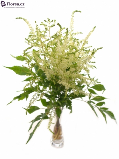 ASTILBE WASHINGTON 60cm