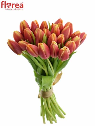 Benefice Amelie Kytice 25 tulipánů LEEN VAN DER MARK