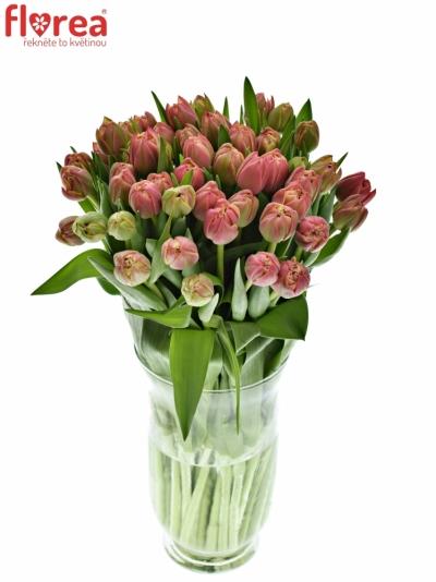 Benefice Amelie Tulipán COLUMBUS