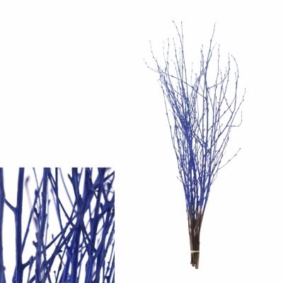 BETULA ALBA BLUE