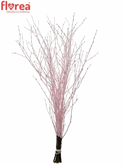 BETULA ALBA LIGHT PINK