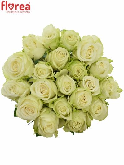 Bílá růže ADALONIA 80cm (XXL)