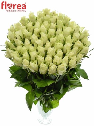 Bílá růže ATHENA 50cm