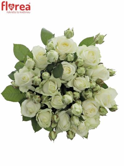 Bílá růže AVALANCHE 70cm/3+