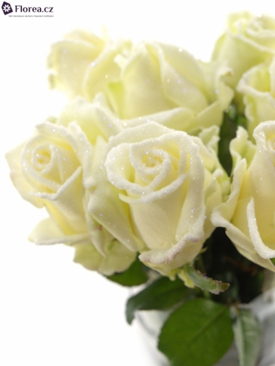Bílá růže AVALANCHE FROST 65cm