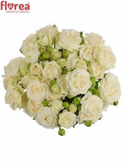 Bílá růže BRIDAL FLOW