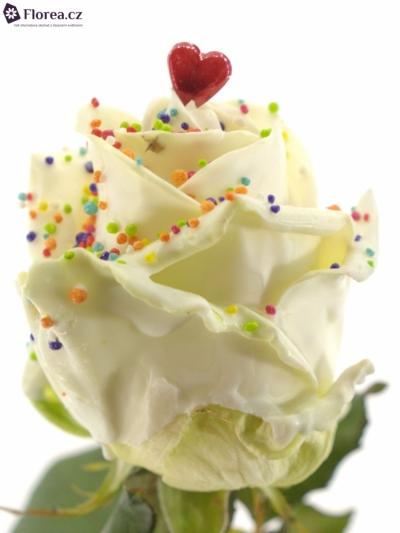 Bílá růže CHOCOLAT DISCO LOVE