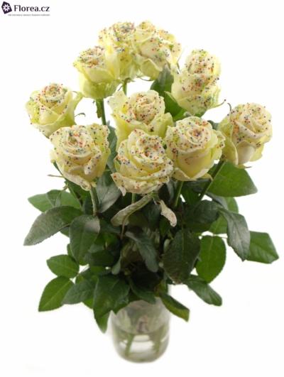 Bílá růže SUGAR DISCO WHITE