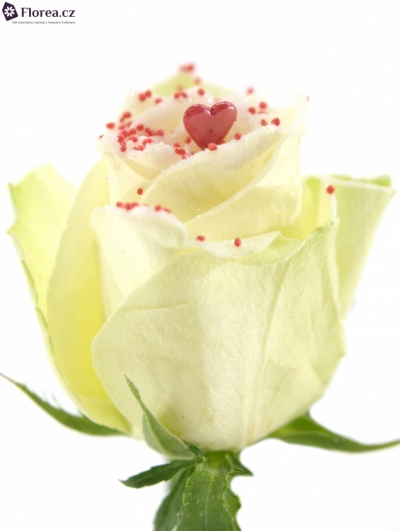 ROSA PEARL RED LOVE 60cm