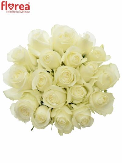 Bílá růže PROUD 50cm (XL)