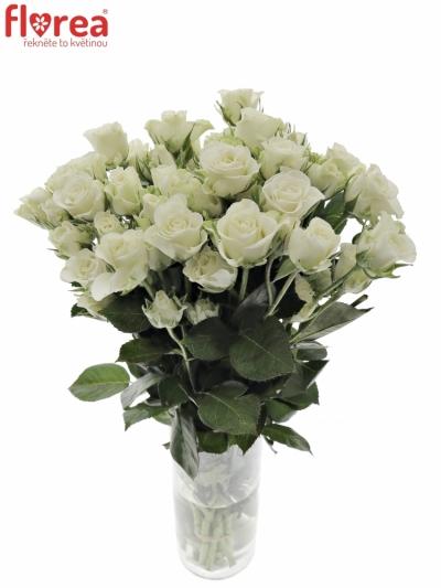 Bílá růže SNOWFLAKE