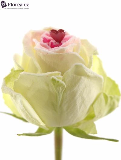 ROSA SUGAR LOVE 60cm R188