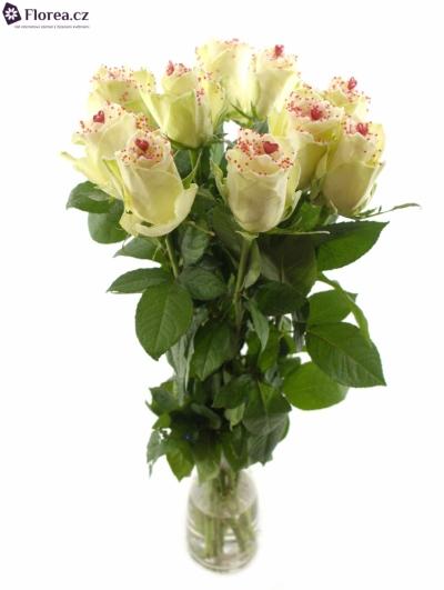 Bílá růže SUGAR LOVE DISCO
