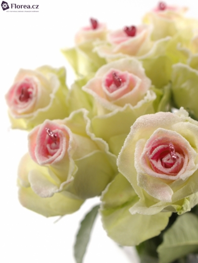 Bílá růže SUGAR LOVE
