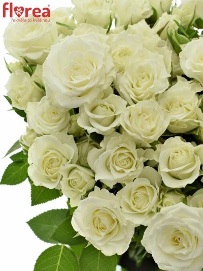 ROSA TR ROSA VIVIANE 40cm/4+