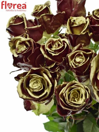 Bílá růže WAX BORDEAUX GOLD 70cm