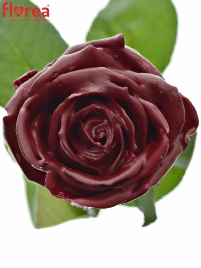 ROSA WAX DARK RED 60cm (L)