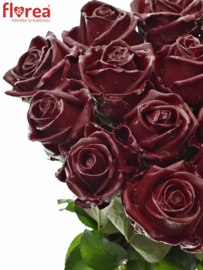 Bílá růže WAX DARK RED 70cm