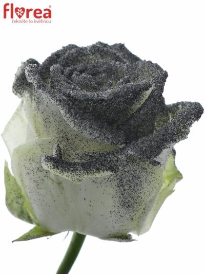 ROSA GLITTER BLACK 60cm (R 69)