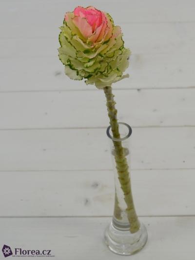 Okrasné zelí ROZE 55cm