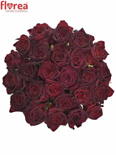 Černá růže BLACK BACCARA