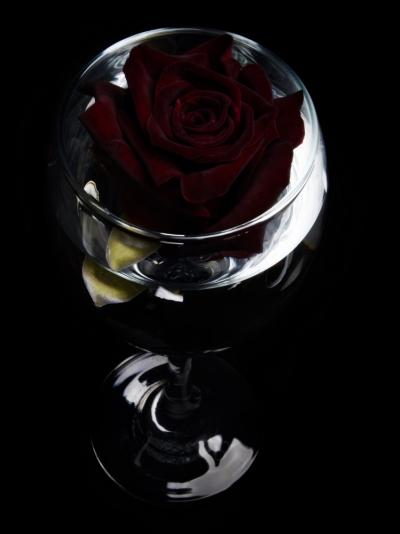 ROSA BLACK BACCARA 50cm (L)