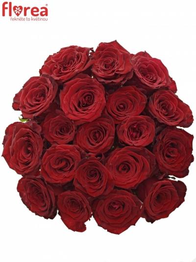 Červená růže ABBA 70cm (XL)