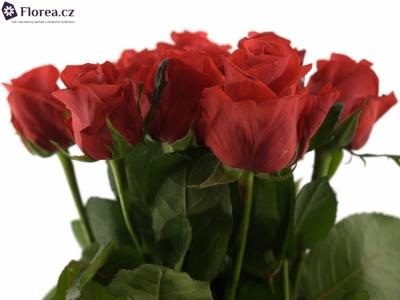 ROSA AWARD 70cm