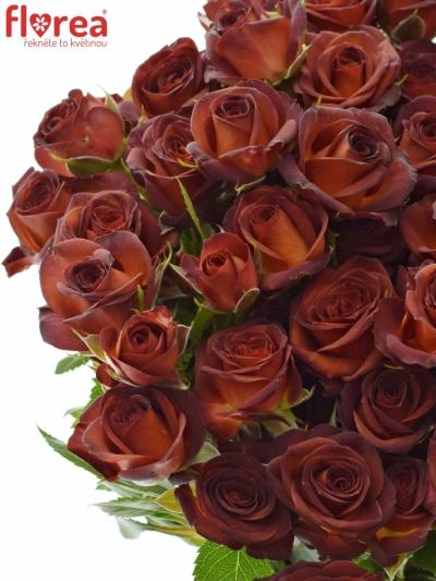 Červená růže CHOCOCCINO 50cm/5+