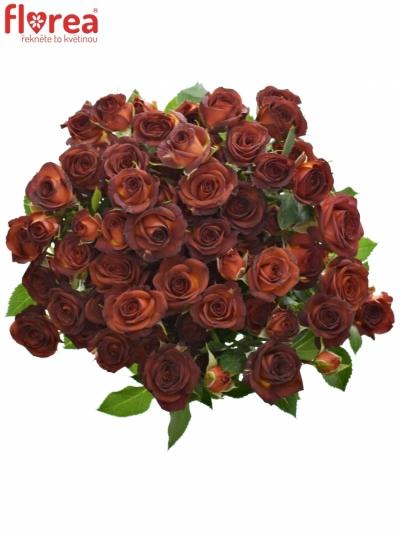 Červená růže CHOCOCCINO 40cm/3+
