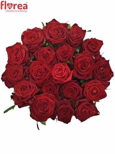 Červená růže CON AMORE