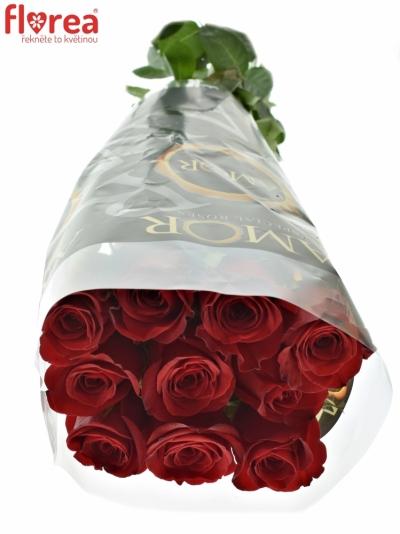 ROSA FREEDOM 90cm (XL)
