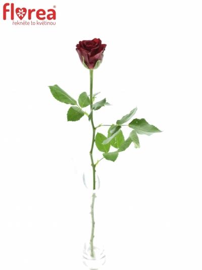 ROSA FURIOSA 35cm