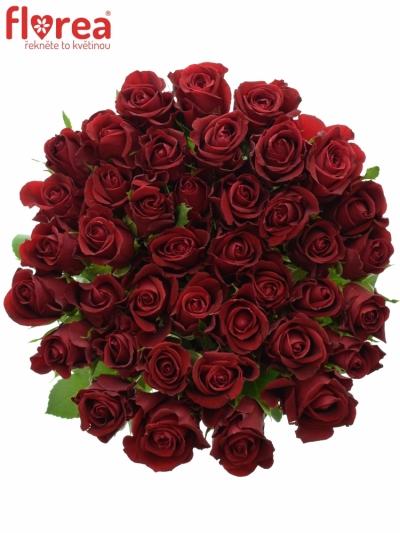 Červená růže FURIOSA