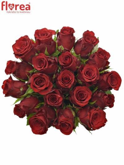 Červená růže INCREDIBLE 50cm (XL)