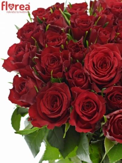 ROSA MANDY 70cm (M)