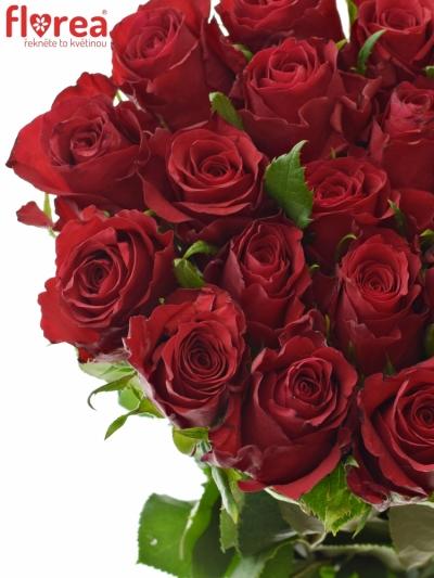 Červená růže NATURES RED 60cm (M)
