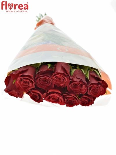 ROSA RED DRAGON 50cm (M)