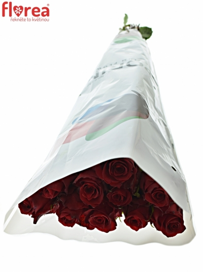 ROSA RED LION 70cm (XL)